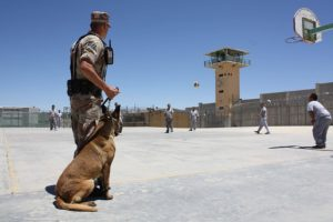 US Supreme Court issues decision in case involving drug-sniffing dogs