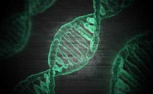 DNA Evidence Can Put the Wrong Person Behind Bars