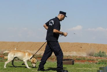 How a Drug-Sniffing Dog Can Get Your Case Dismissed